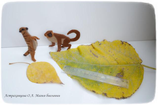 магия-биологии-осенние-игры-листья-эксперимент-мартышка-сурикат-пальчиковая-игрушка