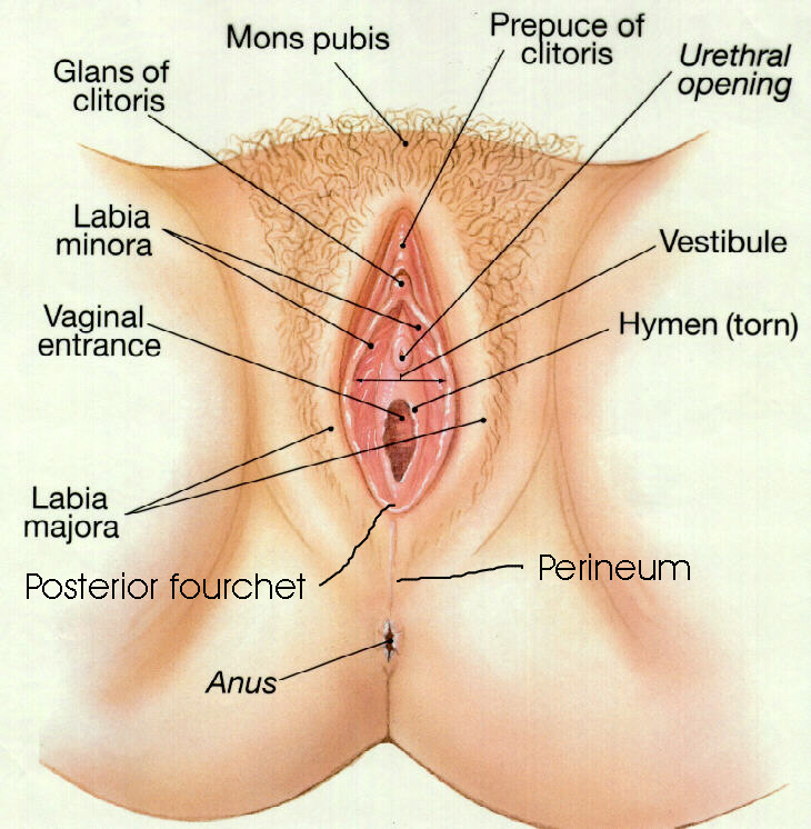 Photo of ladies vagina