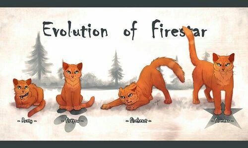 Imagini pentru pisicile razboinice