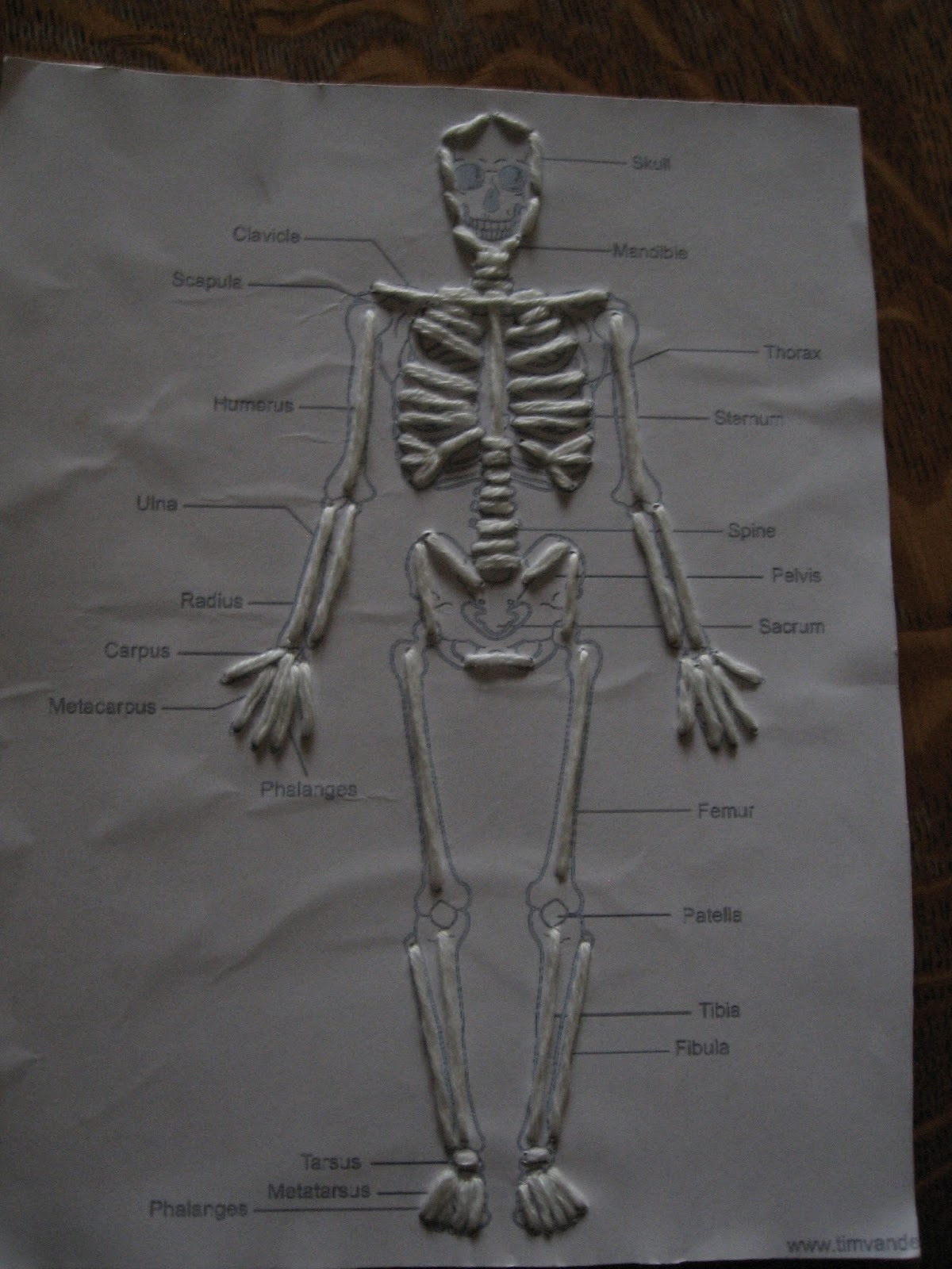 skeleton diagram for 4th grade pioneer mosfet 45wx4 wiring almost unschoolers skeletal system sewing cards