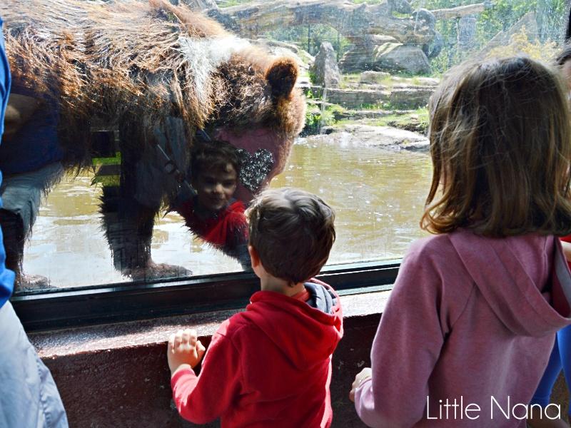 ocio familiar reserva marcelle zoológico plan con niños
