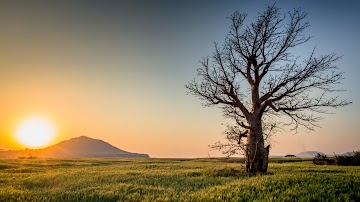 Old Tree With Sunset