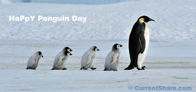 World Penguin Day Facebook Cover Photos