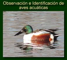 http://iberian-nature.blogspot.com.es/p/ruta-tematica-observacion-e.html