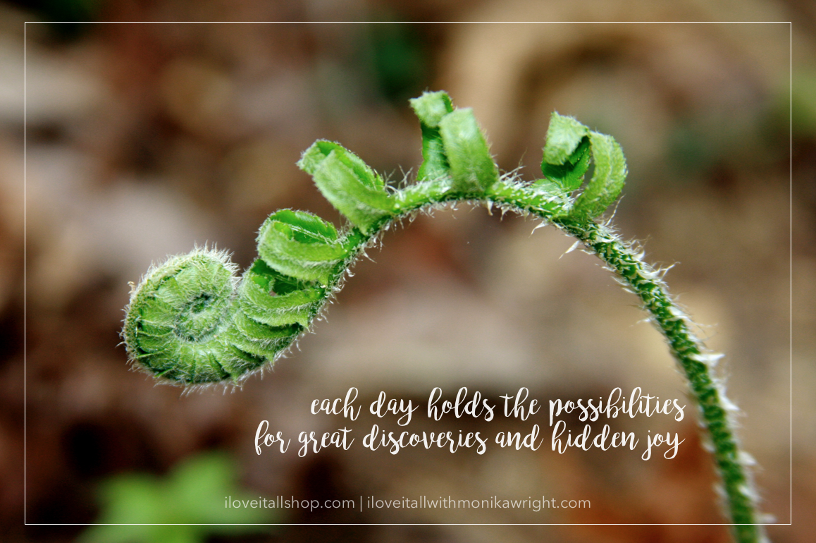 #fiddlehead #fern #nature #nature photography #each day #possibilities #discoveries #hidden joy #joy #sunday photos