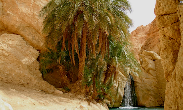 Desert spring of Chebika, Tunisia
