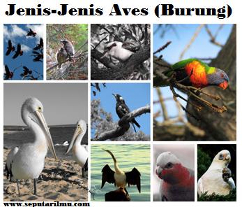 Pengertian, Kalsifikasi, Struktur Tubuh, dan 9 Ciri Aves (Burung) Beserta Contohnya Menurut Para Ahli Terlengkap