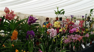 Welsh Orchid Festival 2015©Polly o'Leary2015