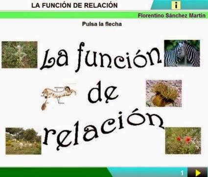 http://cplosangeles.juntaextremadura.net/web/edilim/curso_3/cmedio/los_seres_vivos_3/la_relacion/la_relacion.html