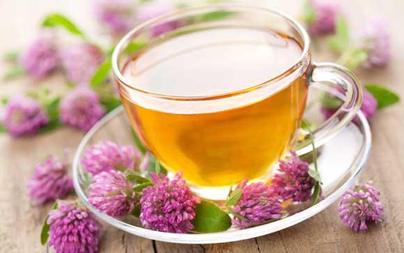 Чай из клевера отличное мочегонное, потогонное, отхаркивающее, мягчительное, противовоспалительное, антисептическое средство. Применяется при малокровии, кашле, простудных заболеваниях, малярии, золотухе, болезненных менструациях, ревматических болях.