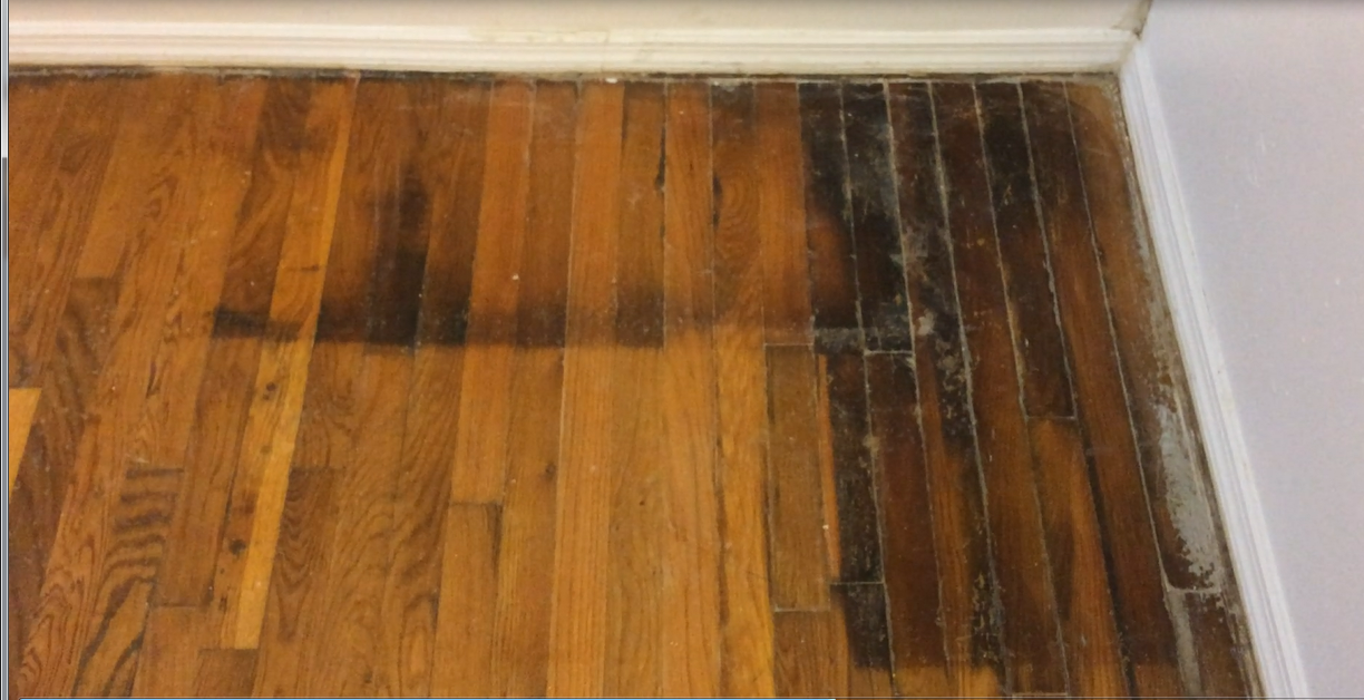 How to clean urine soaked wood floors thefloors co for How to clean floor stains