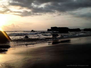 Dogs Playing On The Beach In The Sunset Moment At Batu Bolong Beach, Canggu Village, Badung, Bali, Indonesia