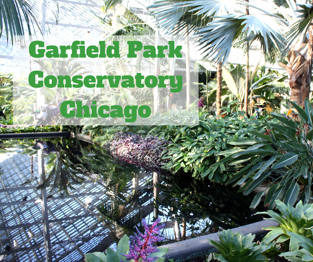 Garfield Park Conservatory in Chicago in winter