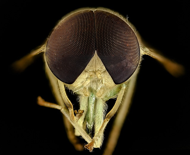 ¿Cual picadura de insecto duele más?
