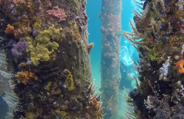 Sea TREK Western Australia helmet dive