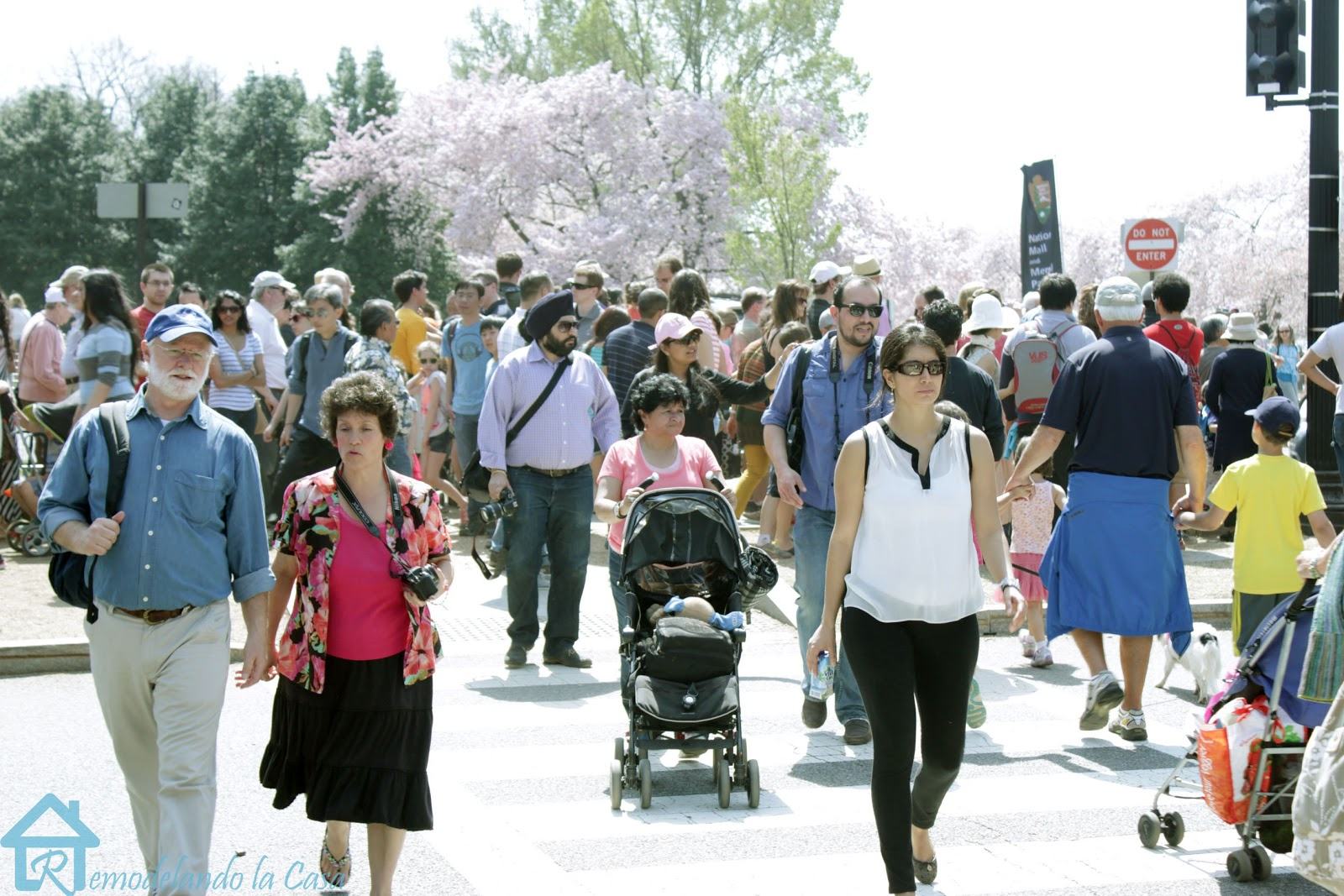 Lots of people from all around the globe during cherry blossom festival in DC