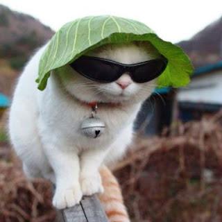 Gambar Kucing Pakai Kacamata Lucu Banget