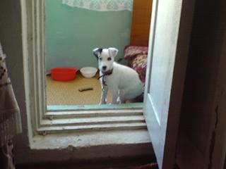Собака сидящая в дверях