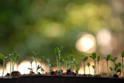 how to grow celery from seed the garden of eaden