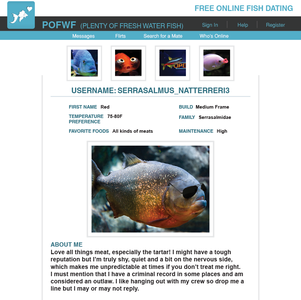 Freshwater fish online canada -  Fresh Water Fish Make Amazing Pets For People Of All Ages And Backgrounds And Have Long Been A Mainstay Of Our Industry Caring For These Animals Takes