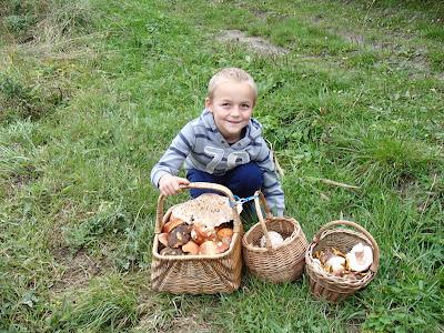 grzyby 2017,grzyby na Orawie, borowiki jadalne, koźlarze, impreza urodzinowa