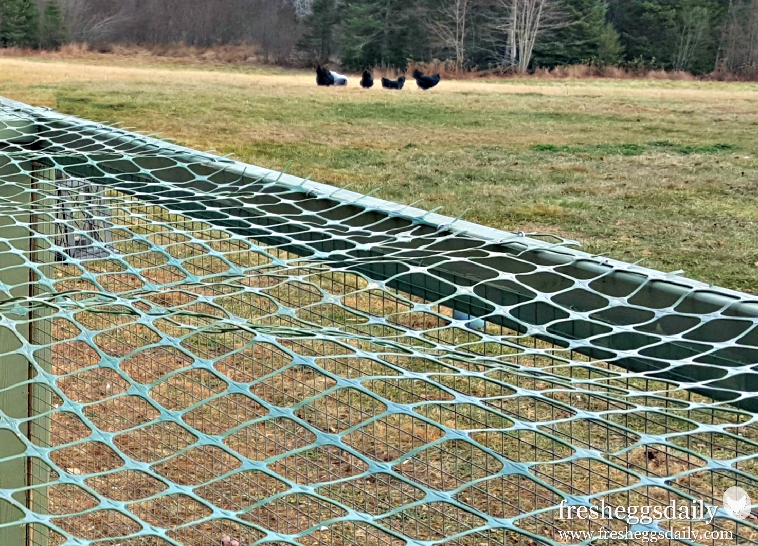 Choosing The Right Fencing For Your Chicken Coop Run Or Garden Joining Electric Wire Poultry Netting