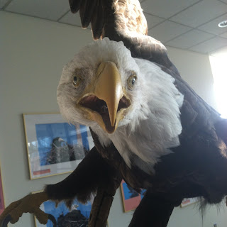 Illinois Department of Natural Resources Bald Eagle