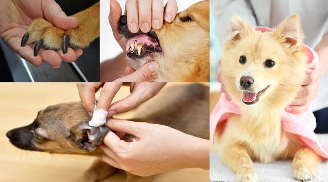 grooming-toenails-teeth-ears