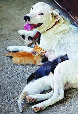 Чужих не бывает животные кормят чужих зверей собака и котята