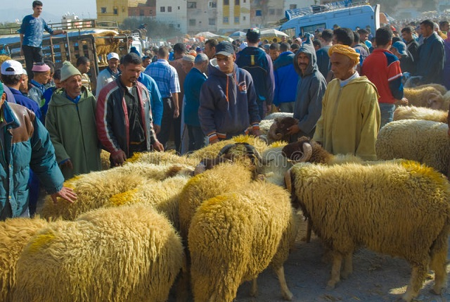 sheep eid al-adha