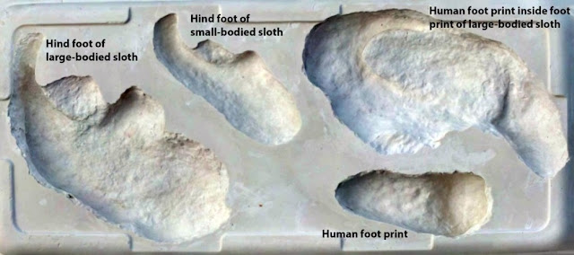 Giant sloth vs. ancient man: fossil footprints track prehistoric hunt