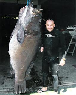 Rank de Cherne 160 Kg - Rogerio Almicar Dias - pesca submarina