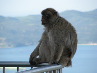 Orli, Just Breathe - Life in Gibraltar