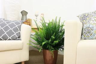 Kimberly queen fern