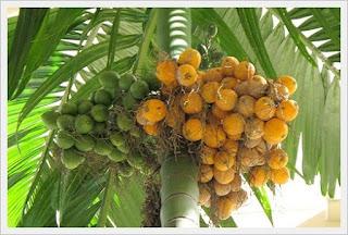 http://daffaran.blogspot.com/2017/02/mamfaat-buah-pinang-untuk-wanita.html