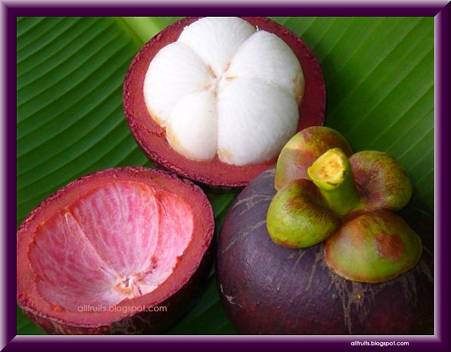 fruits that start with the letter c fruits name starts with the letter quot m quot fruits in the world 21911 | mangosteen 2
