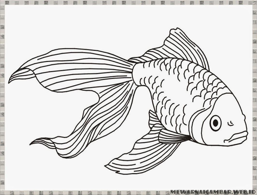 Gambar Gambar Ikan Mas Koki Dunia Binatang Bliblinews Mewarnai