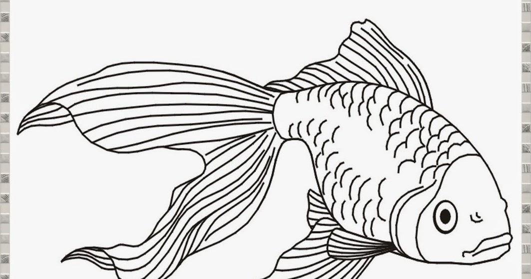 Cara Menggambar Ikan Hias Oskar Arwana Maskoki Cupang Dan Koi