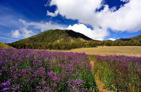 Oro-oro Ombo, Gunung Semeru