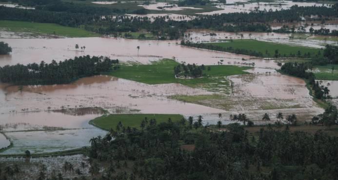 El 80% de los productores afectados por huracán María no tiene seguro