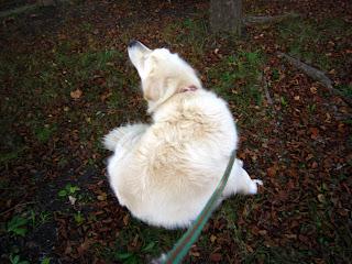 公園の落ち葉に秋の気配