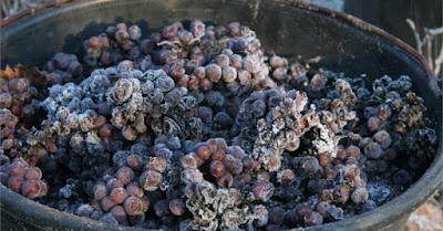 Blog vins Beaux-Vins Einswein icewine vin de glace dégustation oenologie