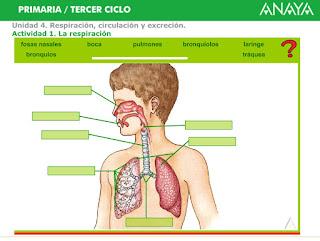 http://www.ceiploreto.es/sugerencias/A_1/Recursosdidacticos/QUINTO/datos/02_Cmedio/datos/05rdi/ud04/01.htm