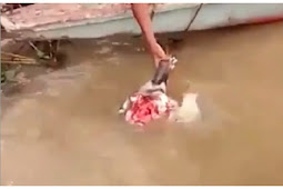 Masukkan Kepala Sapi ke Sungai, Hal Mengerikan Terjadi
