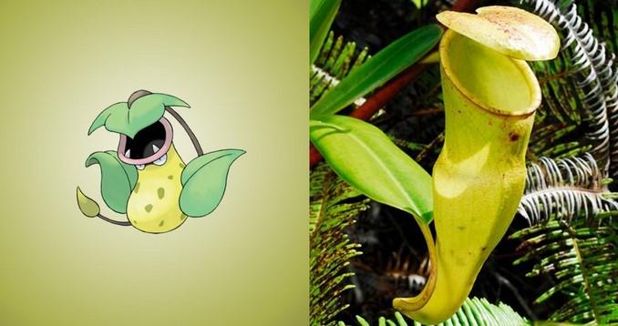 Pokemon-go-Victreebal-Kantong-Semar