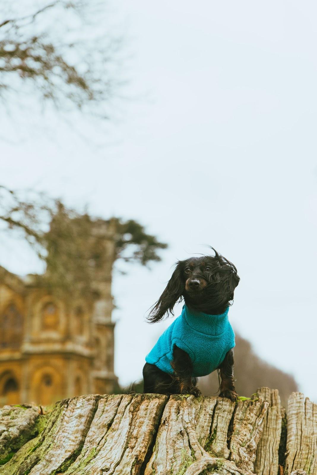 stowe equafleece dachshund cute liquidgrain liquidgrain