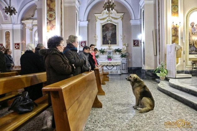 Heart-broken dog attends church every day, waiting for his dead owner to return!