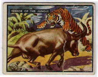 1950 Topps card - 'Terror of the Jungle'.