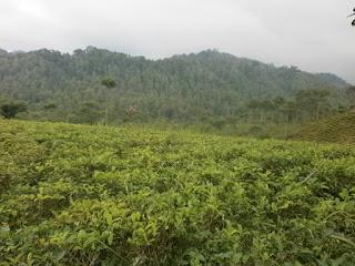lahan perkebunan di indonesia