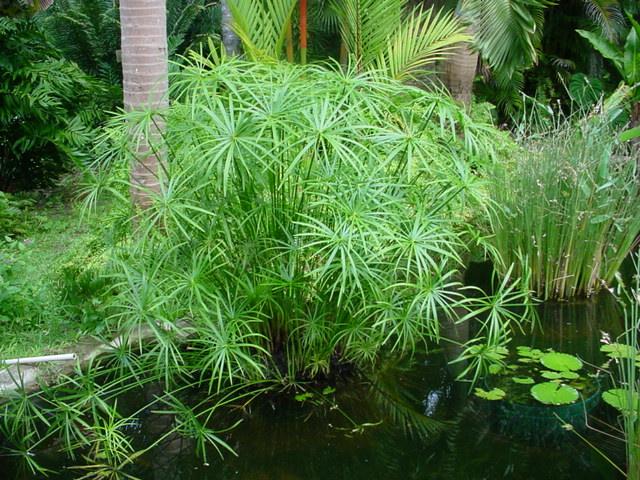 8 Tumbuhan yang Hidup di Air Beserta Gambarnya